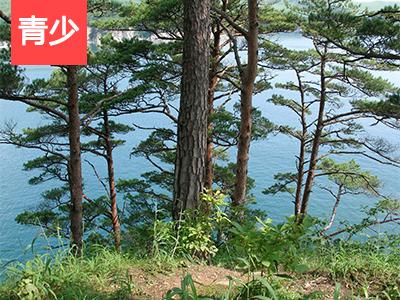 【外教精品课】Tangwanghe National Park | 地理篇: 伊春市汤旺河风景区