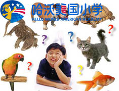 【哈沃美国小学精品绘本--高级Advanced2】What Pet Should You Get?